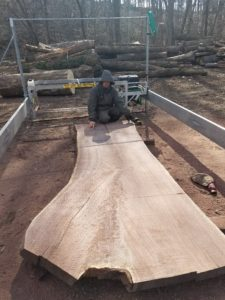 Large walnut slab